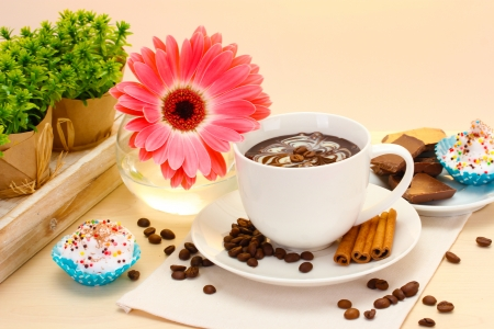 cup of coffee and gerbera  beans, cinnamon sticks on wooden table photo