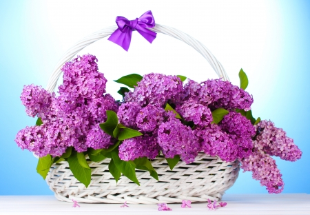 beautiful lilac flowers in basket on blue background Stock Photo - 14454934