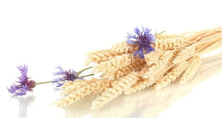 ears of wheat and cornflower isolated on white Stock Photo - 14436625