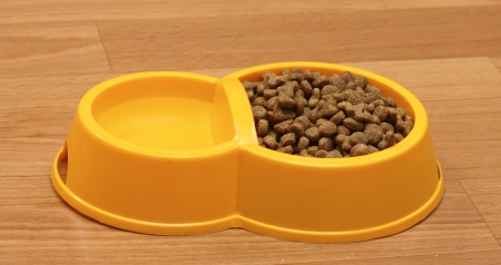 dry cat food and water in yellow bowl on the floor photo