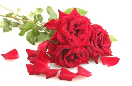 three beautiful red roses with drops isolated on white photo