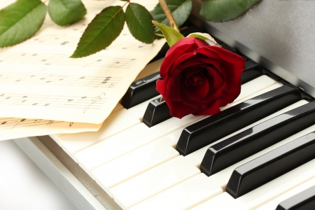 background of piano keyboard with rose Stock Photo - 14457484