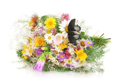 black butterfly on wildflowers isolated on white photo