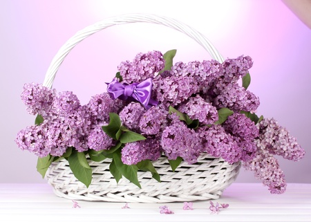 beautiful lilac flowers in basket on purple background photo
