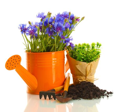 watering can,  tools and plants in flowerpot isolated on white photo