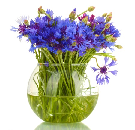 cornflower: cornflowers in glass vase isolated on white