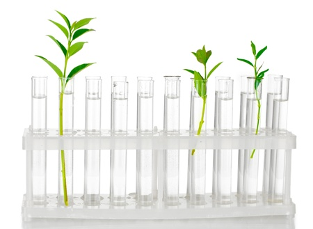 lab test: Test-tubes with a transparent solution and the plant isolated on white background close-up Stock Photo