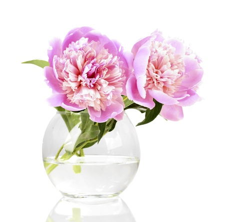 glass vase: Three pink peonies in vase isolated on white