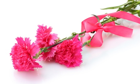 Beautiful pink carnations isolated on white photo