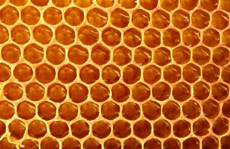 yellow beautiful honeycomb with honey, background Stock Photo - 14539887