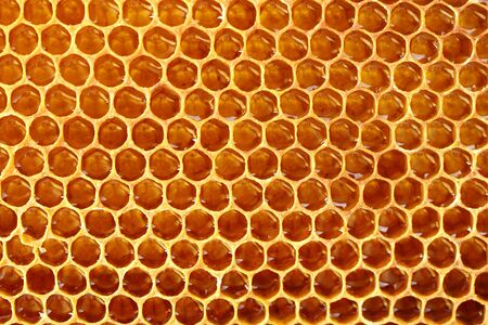 yellow beautiful honeycomb with honey, background Stock Photo - 14539987