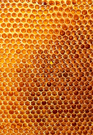 yellow beautiful honeycomb with honey, background photo