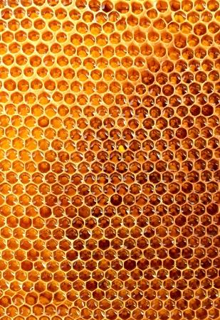 yellow beautiful honeycomb with honey, background Stock Photo - 14540002