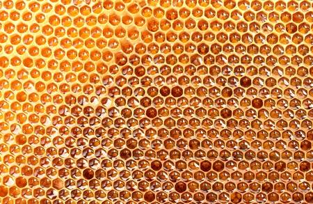 yellow beautiful honeycomb with honey, background Stock Photo - 14540017