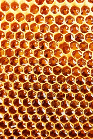 yellow beautiful honeycomb with honey, background Stock Photo - 14540007