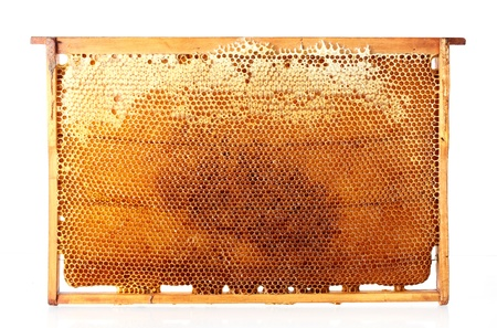 yellow beautiful honeycomb frame with honey, isolated on white Stock Photo - 14539992