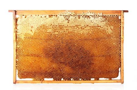 yellow beautiful honeycomb frame with honey, isolated on white Stock Photo - 14539992