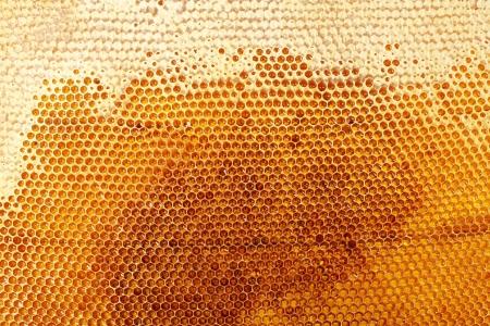 yellow beautiful honeycomb with honey, background Stock Photo - 14540019