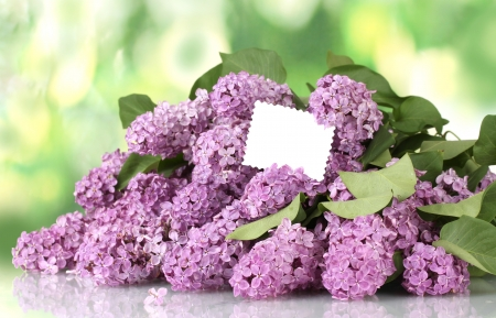 beautiful lilac flowers on green background photo