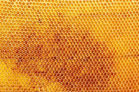 yellow beautiful honeycomb with honey, background Stock Photo - 14691242