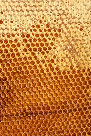 yellow beautiful honeycomb with honey, background Stock Photo - 14691853
