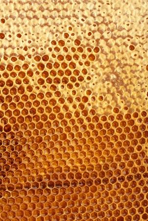 yellow beautiful honeycomb with honey, background Stock Photo - 14691853