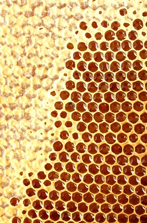 yellow beautiful honeycomb with honey, background Stock Photo - 14691146