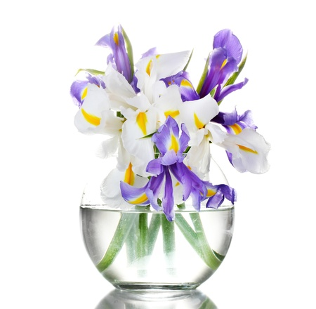 iris blossom: Beautiful bright irises in vase isolated on white