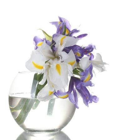 Beautiful bright irises in vase isolated on white