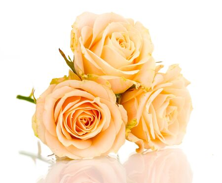 Beautiful roses isolated on white photo