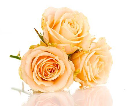 grosse tete: Belles roses isol� sur blanc Banque d'images