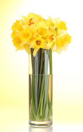 beautiful yellow daffodils in transparent vase on yellow background photo