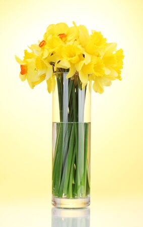 beautiful yellow daffodils in transparent vase on yellow background Stock Photo - 14693024