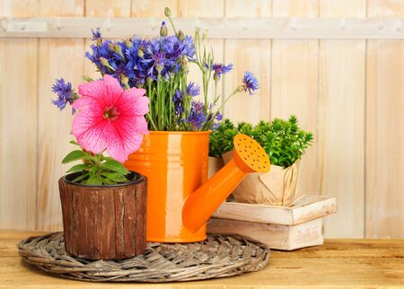 watering can and plants in flowerpots on wooden background photo
