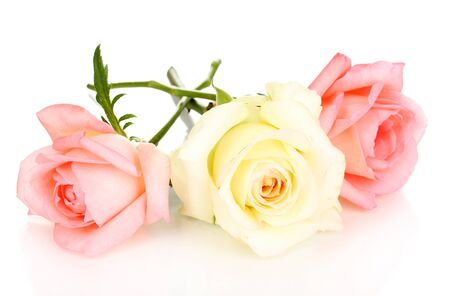 Three roses isolated on white photo