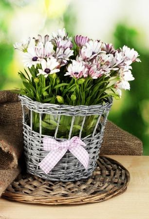 bouquet of beautiful summer flowers in wicker vase, on green background photo