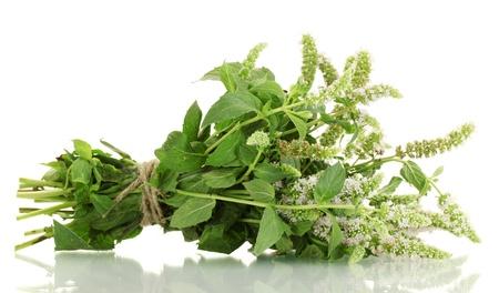 menta: menta fresca con flores, aislado en blanco Foto de archivo