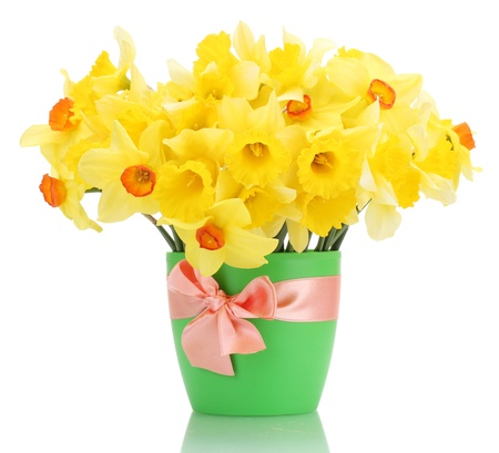 beautiful yellow daffodils in flowerpot isolated on white Stock Photo - 14741160