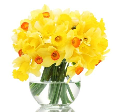 mooie gele narcissen in transparante vaas op wit wordt geïsoleerd Stockfoto