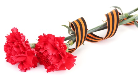 carnations and St. George's ribbon isolated on white Stock Photo - 14739066