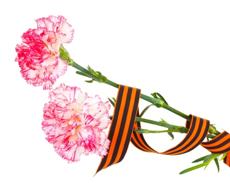 carnations and St. George's ribbon isolated on white Stock Photo - 14741366