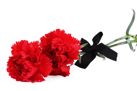 carnations and black ribbon isolated on white Stock Photo - 14741204