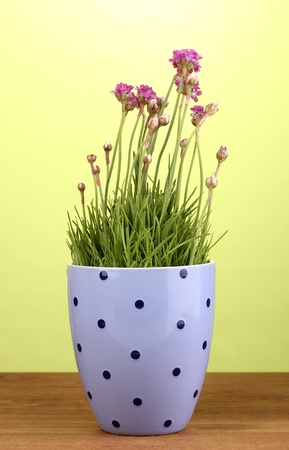Pink flowers in pot on wooden table on green background photo
