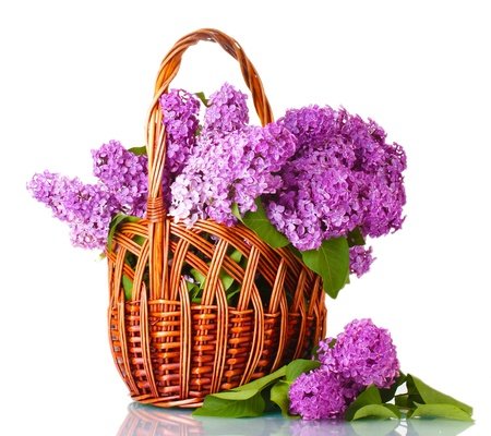 fragrant: beautiful lilac flowers in basket isolated on white Stock Photo