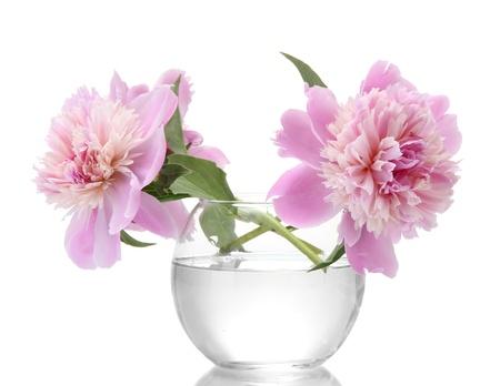 florero: flores peon�as rosadas en florero aislado en blanco Foto de archivo