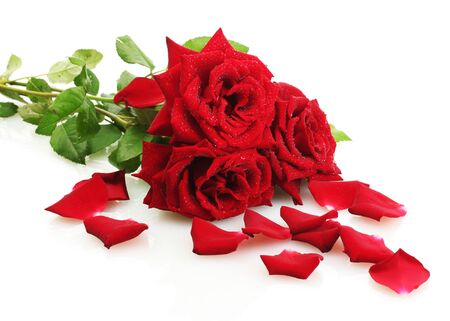 valentinas: three beautiful red roses with drops isolated on white
