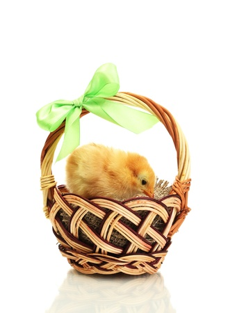 beau petit poulet dans le panier isol�e sur le blanc Banque d'images - 14794371