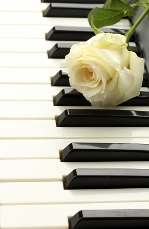 background of piano keyboard with rose photo