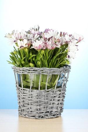bouquet of beautiful summer flowers in wicker vase, on blue background photo