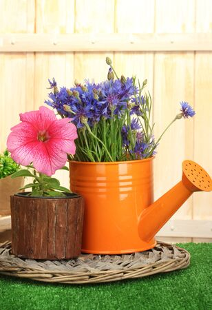watering can and plants in flowerpots on grass on wooden background photo